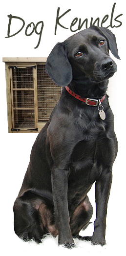 Dog Kennels - Black Lab